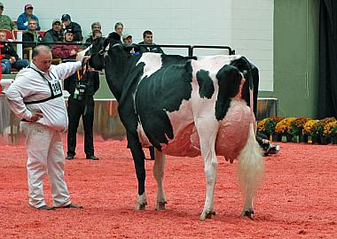 RF Goldwyn Hailey in haar gloriedagen: de Royal Winter Fair in 2014