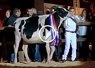HHH-show 2016, Young Breeders